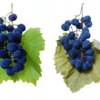 Blue grape and raisin cluster - Stock Photo