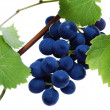 Stock Photo: Blue grape cluster with leaves