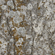 Old structure stone — Stock Photo