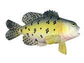 Fish a souvenir — Stock Photo