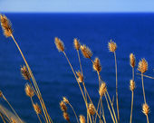 Grass on a background of the sea — Stock Photo