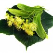 Linden inflorescence — Stock Photo