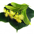 Stock Photo: Linden inflorescence