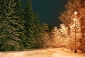 Night trees covered with snow — Stock Photo