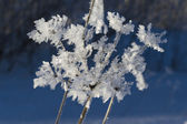 Flower covered in snow and icicles — Stock Photo