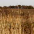 The dried up grass — Stockfoto