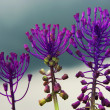 Three flowers — Stockfoto