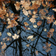 The fallen down leaves in a pool - Stock Photo