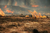 Burning pine needles carpet — Stock Photo