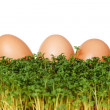 Royalty-Free Stock Photo: Cress and eggs