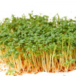 Cress — Stock Photo #1734806