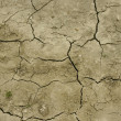 Field after drought — Stock Photo