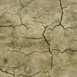 Stock Photo: Field after drought