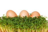 Cress and eggs — Stock Photo