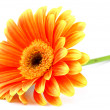 Royalty-Free Stock Photo: Orange gerbera isolated on white