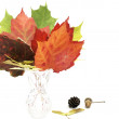 Stock Photo: Colorful fall leafs solated