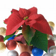 Christmas decoration poinsettia - Stock Photo