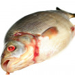 poisson dorade — Photo