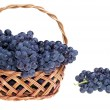 Grape — Stock Photo