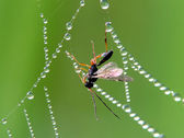 Insect and cobweb — Stock Photo