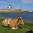 Stock Photo: Island Solovki