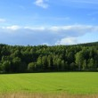 Green grassland and forest — Stock Photo #2035817