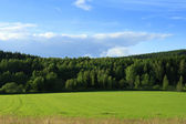 Green grassland and forest — Stock Photo