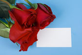 Three rose for congratulation — Stock Photo