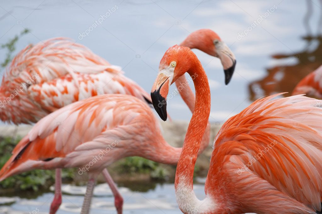 Pink flamingo is in the Zoo — Stock Photo #2036334