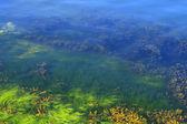Algae in the ocean floor — Stock Photo