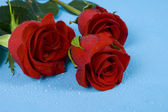 Three dark red roses with droplets — Stock Photo