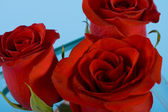 Three red roses — Stock fotografie