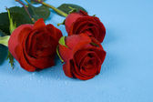 Dark red roses with drops — Stock Photo