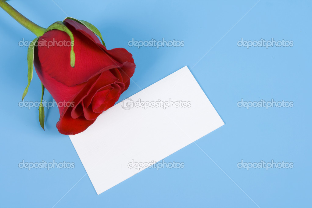 Red rose and visiting card are isolated blue background —Photo by