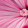 Tenderness of pink flower — Stock Photo #2323122