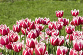 Spring blume — Stockfoto