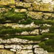 Moss covered stone wall - Stock Photo