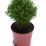 Tree in pot — Stock Photo #1726977