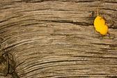Old oak wood with deep cracks — Stock Photo