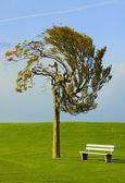 árvore e banco — Foto Stock