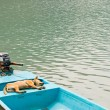 Relaxing dog in vacation on the boat — Stock Photo