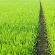 Path in Green field — Stock Photo