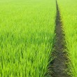 Path in Green field — Stock Photo #1808236