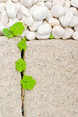 White pebble and leaf — Stock Photo
