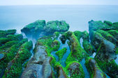 Rocky Seacoast full of green seaweed — Stock Photo