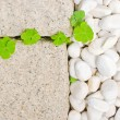 White pebble with green leaf - Stock Photo