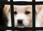 Cute little puppy behide the fence — Stock Photo