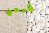 White pebble with green leaf — Stock Photo