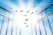 Fly overcome the difficult gate — Stock Photo