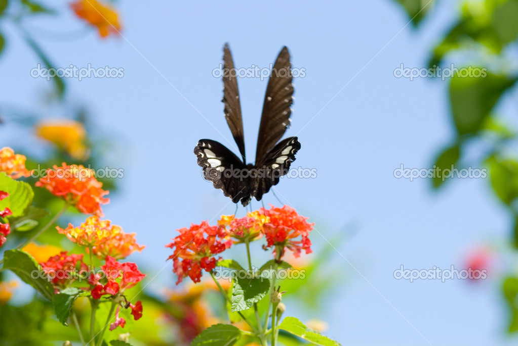 Blue Butterfly Flying In The Sky under blue sky  flying and